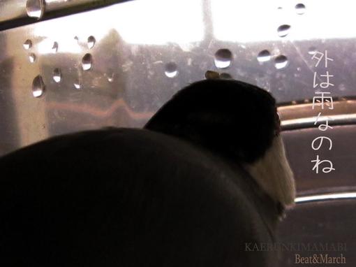 ぶんたさん「お外は雨なのね.jpg