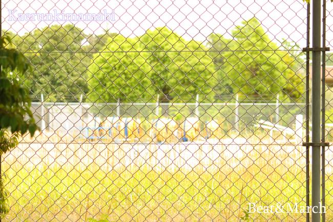 プール 草いっぱい.jpg