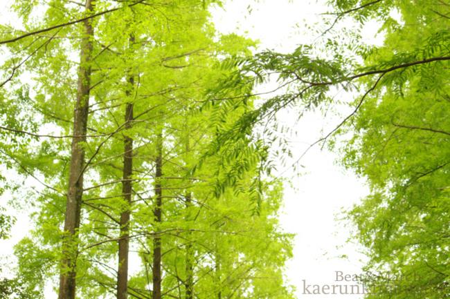 大きな大きな木♪.jpg