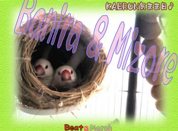 巣篭もりバニラ ミゾレ.jpg