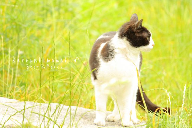 白黒猫しゃん♪.jpg