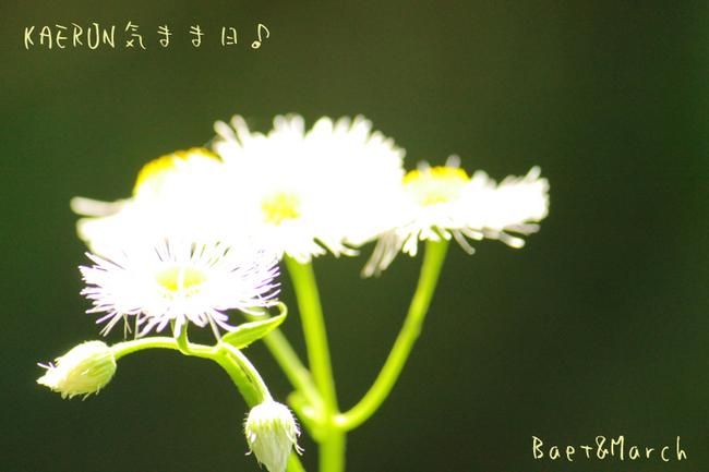 道草♪.jpg