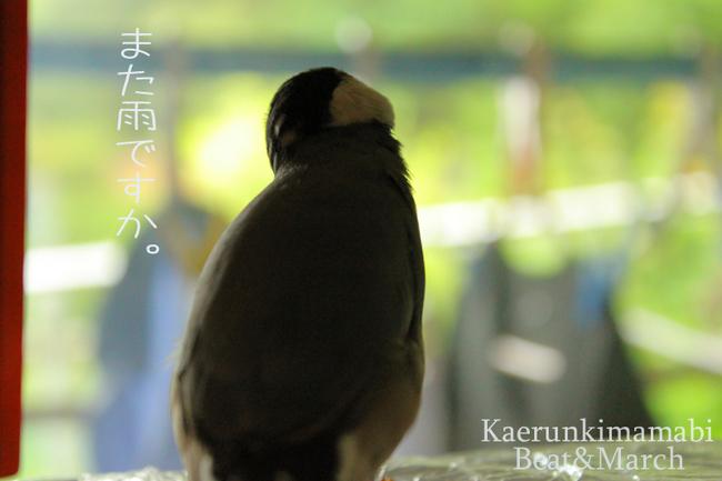 雨の日ぶんたさん.jpg