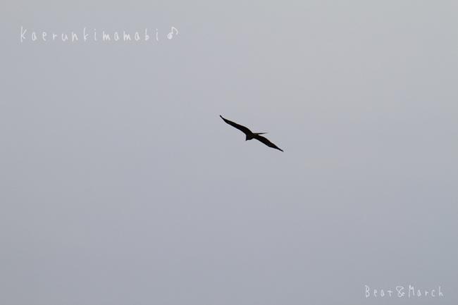 飛行物体鳥.jpg